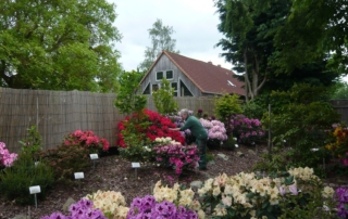 Rhododendron Mai 2019