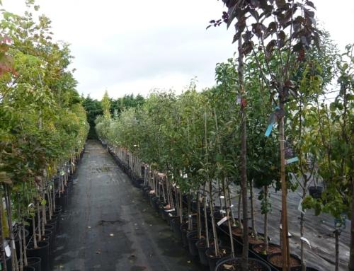 Beginn der Garten-Herbstsaison 2019