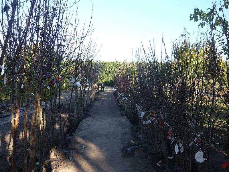 Freilandobstbäume