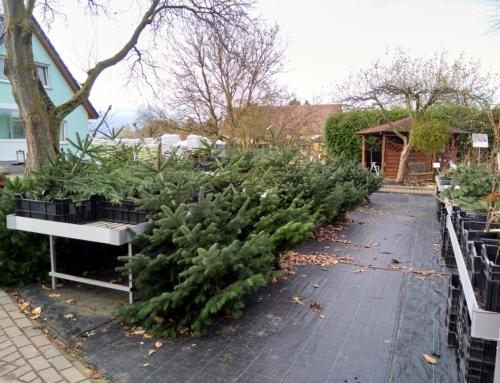 Weihnachtsbäume bis zum 14. Dezember