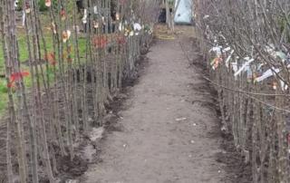 Obstbaumeinschlag Herbst 2020