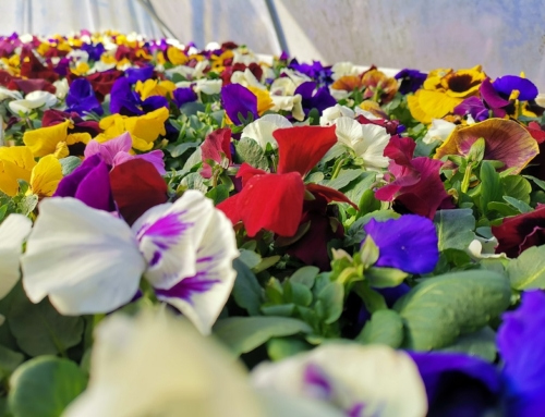 Start in die Frühjahrssaison ab 1. März