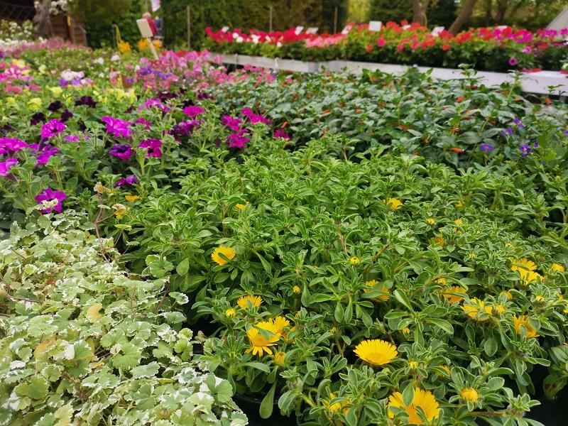 Beet-und Balkonpflanzen 2021.